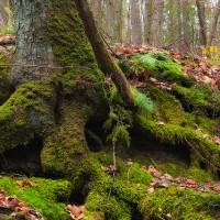 God, a Tree Stump, Rumi & Me.