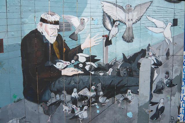 pigeons, birds, free
