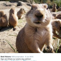 Allow me to tell you a little story about Prairie Dogs not getting Poisoned to Death, hopefully.