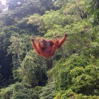 My Personal Palm Oil Conflict.
