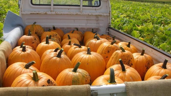 pumpkin-1212801_1280