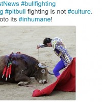 """Why Barbaric """"Sport"""" as Entertainment Imperatively Needs to End."""