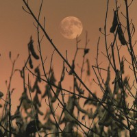 October Full Moon Wisdom with Creative Ritual & Tapping Meditation.