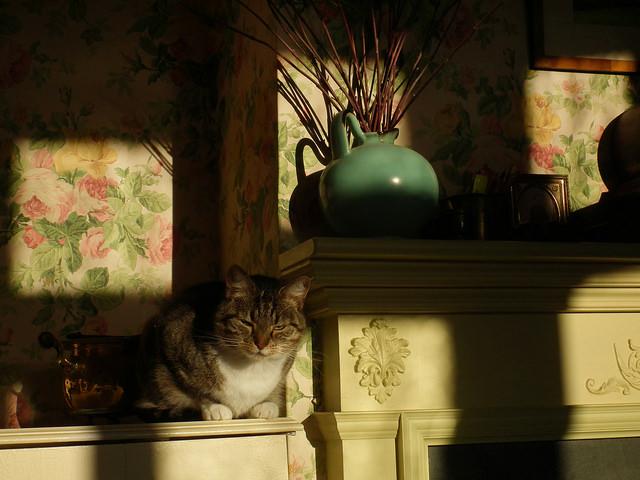 morning cat wake up