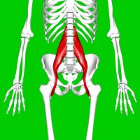 The Psoas is not the Muscle of your F***ing Soul.