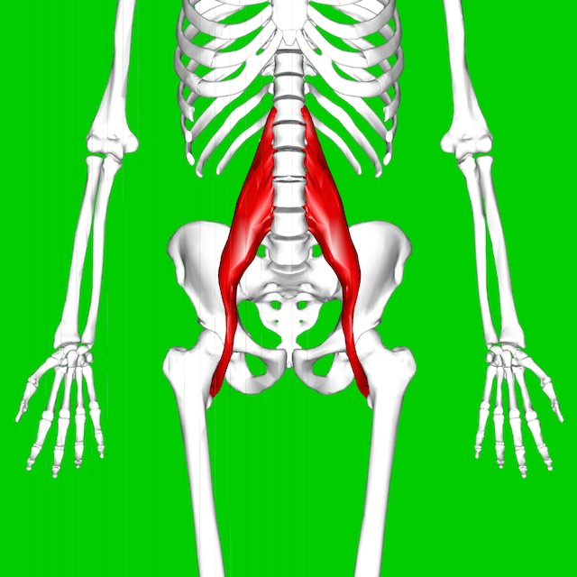 The Psoas is not the Muscle of your F***ing Soul.   elephant journal