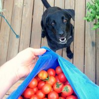 The 5 Most Poisonous Foods our Dogs must Avoid.