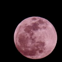 April Pink Full Moon: A Ritual for Letting Go of Pain & Suffering.