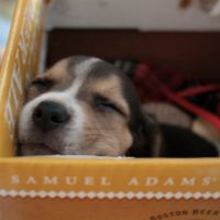 "Six Ways to Manifest a ""Puppy in a Box."""