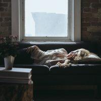 Four natural Remedies to Heal Headaches.