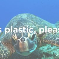5 Things we Can Do Right Now to Protect our Seas.