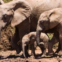 A Father's Day Lesson, as taught by Elephants.