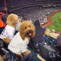 How One Company Is Creating Crazy Dog Joy. {Partner}