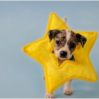 Toys, Treats & Crazy Dog Joy, oh My! One Company dedicated to you Finding your Pup. {Partner}