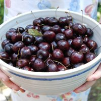 Why we should Eat Cherries this Summer.