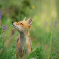 """Wildlife """"Do's & Don'ts"""" for Sick & Injured Animals."""