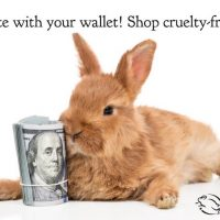 Here's how to make sure your Beauty Regimen is Cruelty-Free.